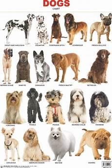 Dog Name Chart Pin On Animals
