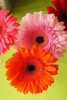 flower wallpaper hd size flower flowers wallpaper