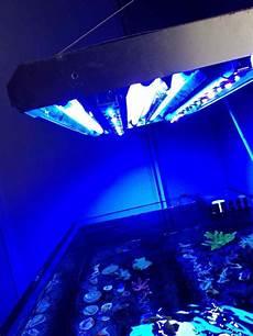 T5 Hybrid Reef Light New Steve S Led T5 Hybrid Build Opinions Reef2reef