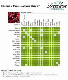 Apple Tree Pollination Chart Cherry Pollination Chart With Images Pollination