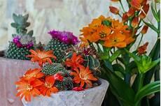 pianta grassa da interno piante grasse cura tipi con fiori da appartamento