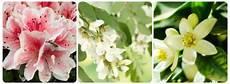 mandare dei fiori significato dei fiori mamma felice