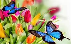 Mariposas Y Flores Hermosas Mariposas Azules Y Flores De Colores Fotos E
