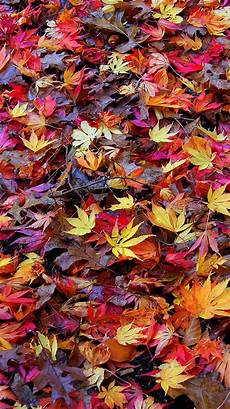 Iphone Wallpaper Fall Hd by 25 Retina Hd Wallpaper Pack For Iphone 6