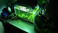 5 Gallon Tank Light 2 5 Gallon Planted Betta Tank Quick Update New Light