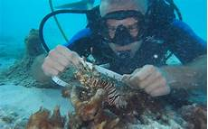 What Do Wildlife Biologists Do Sports And Excursions Marine Biologist South Ari Atoll