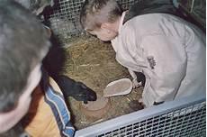 allevamenti animali da cortile associazione l uovo di colombo animali da cortile e