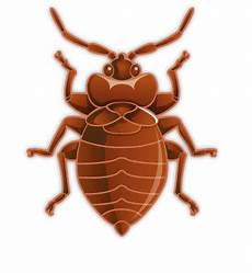 everything you need to about bedbugs jg pest