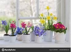 fiori da davanzale primavera fiori sul davanzale foto stock 169 kruchenkova