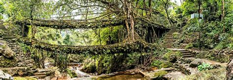 what is root bridge double decker living root bridge cherrapunji meghalaya