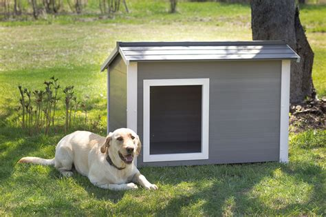 dog in new house ecoflex thermocore ii super insulated dog house new age pet the best for your pet