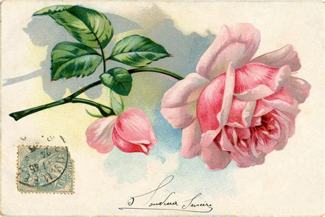 vintage images free free vintage images lovely pink the graphics