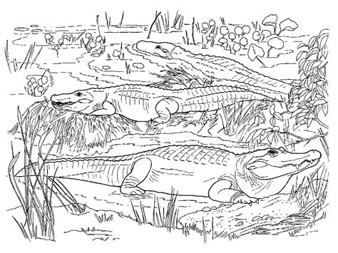 baby animal coloring pages realistic coloring pages realistic coloring pages for adults realistic alligator