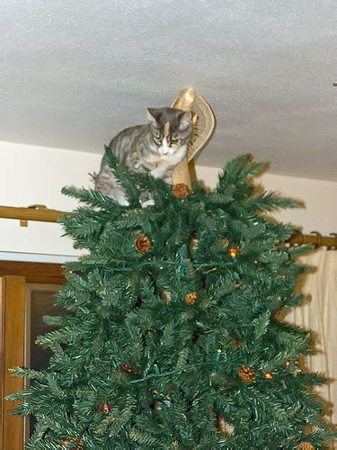 funny wayscto keep cats off christmas tree decorate your tree with cats