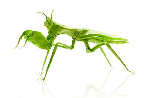 praying mantis origami 24 more amazingly realistic looking origami insects