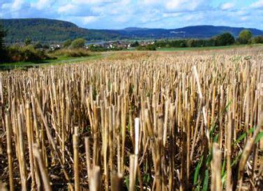 using straw in vegetable garden straw bale gardening strawbale or hay bale gardens