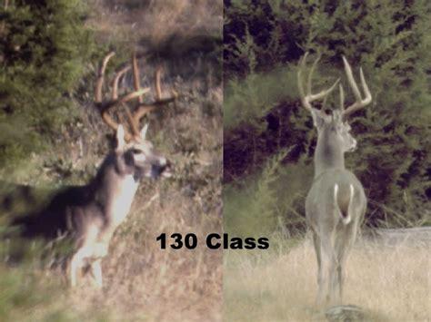 110 class buck boone and crockett scoring on the hoof