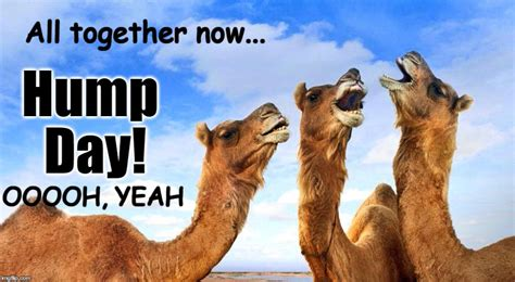 Camel Hump Day Meme - hump day imgflip