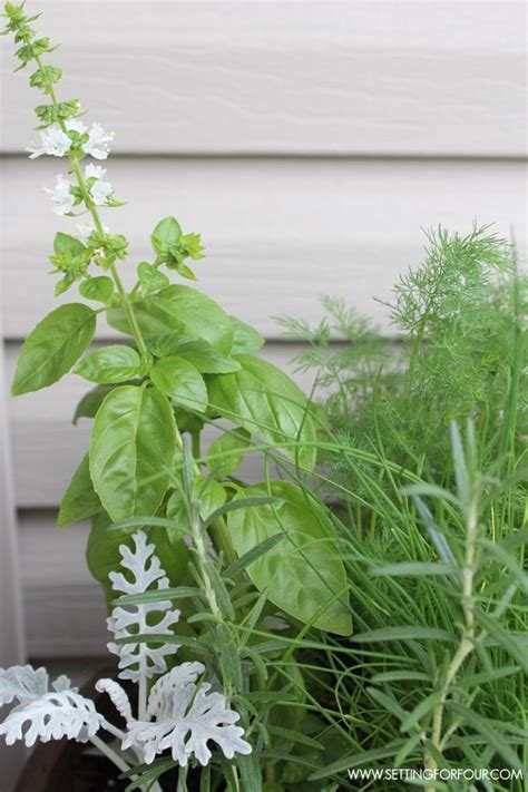 herb garden plants how to plant an outdoor herb garden pot page 2 of 2 setting for four