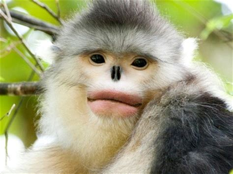 related keywords & suggestions for monkeys from china