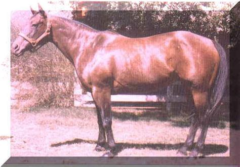 poco len the great aqha mare poco lena in and song the