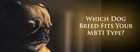 breed matcher what breed matches your mbti personality newsilike