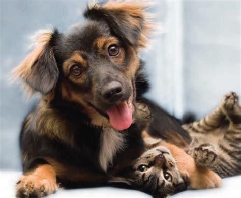 cibo per cani fatto in casa cibo per cani fatto in casa cheap cibo ecologico per cani