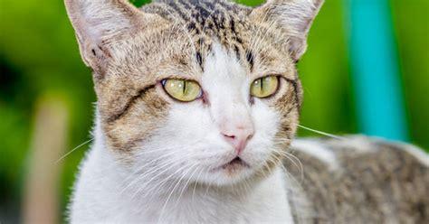 theme names for kittens unique cat names by theme pet care petpremium