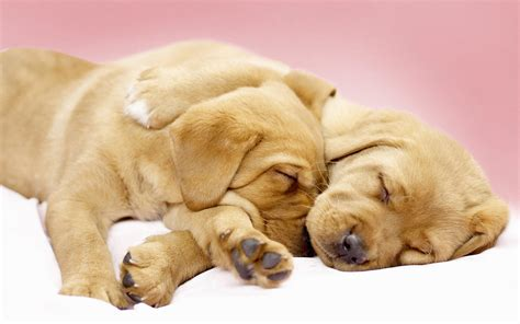 canine cuddles wallpapers hd wallpapers id