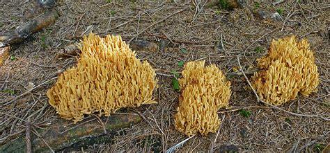 schwammerl kaufen schwammerl 1 foto bild pflanzen pilze flechten