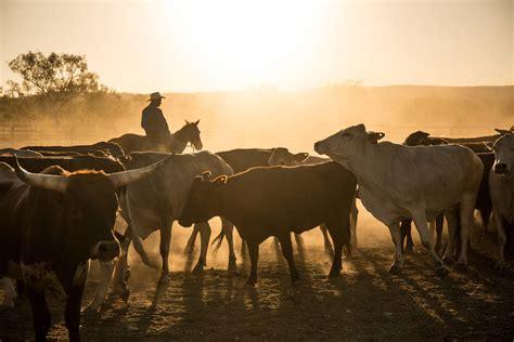 aus arbeiten wwoofing australien arbeiten auf einer farm