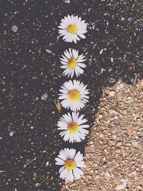 wallpaper flower for iphone 5 tumblr daisy flowers wallpaper tumblr