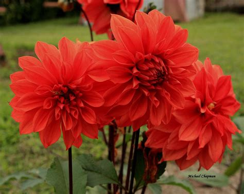 red flowers and their names flowers planets red flowers pics