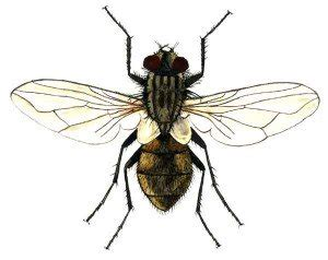 kill house flies how to kill flies natural recipes that will help you to get rid of nasty insects