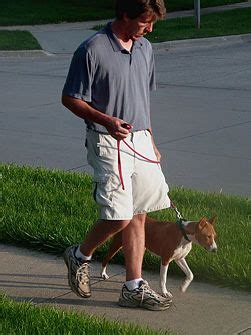 stop from pulling on leash 17 best images about tails on running back to and