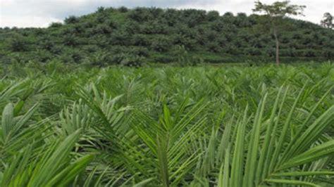 Minyak Goreng Rajawali rni siap bangun pabrik minyak goreng di palimanan sandabi indah lestari