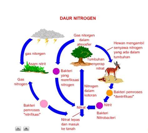 Sk Ii Adalah temukan pengertian pengertian daur nitrogen