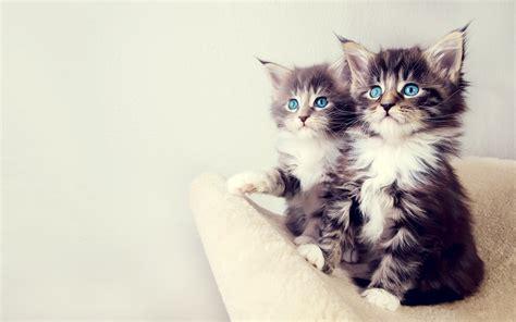 cute kittens wallpapers hd wallpapers id