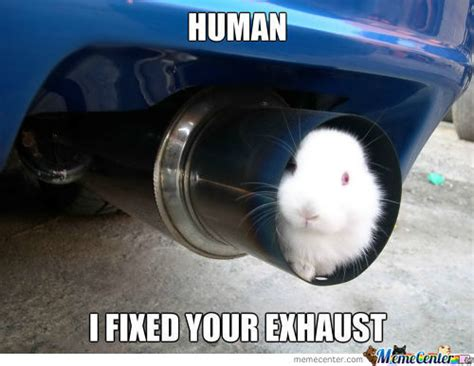 Memes Mufflers - human i fixed your exhaust bunny meme funny things