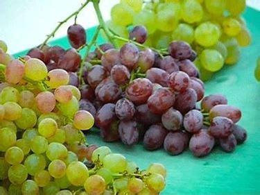 varieta di uva da tavola variet 224 uva da tavola vite
