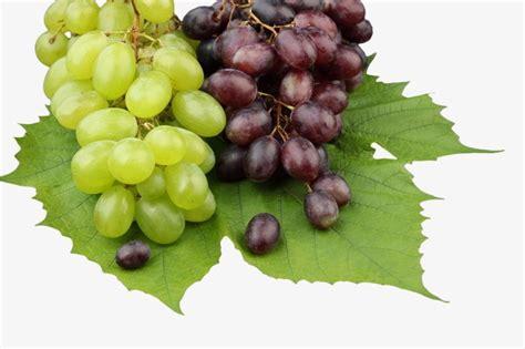 imagenes de uvas verdes y moradas uvas moradas y uvas verdes uva uvas verdes manor png
