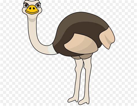 ostrich clipart common ostrich clip ostrich png 612 694