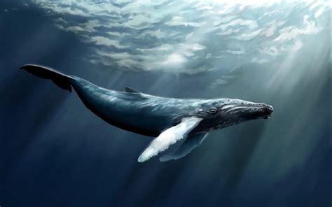 imagenes sorprendentes de ballenas ballena azul en 3d im 225 genes y fotos