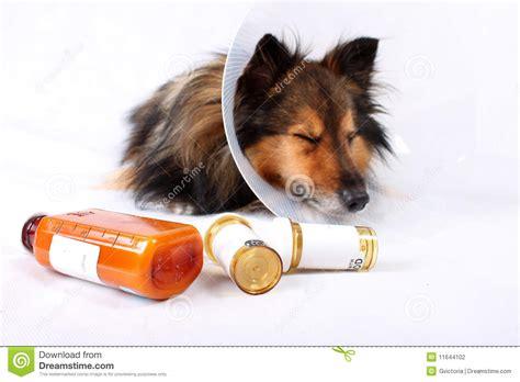 puppy lethargic not sick stock photography image 11644102