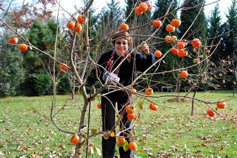 Types Of Flower Arrangements by Ellen Ashley S Gardening Classes Greensboro Triad Nc Learn To Garden