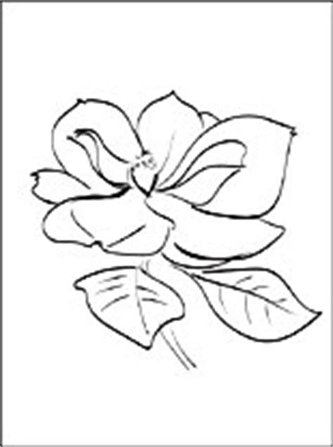 magnolia coloring page coloring pages