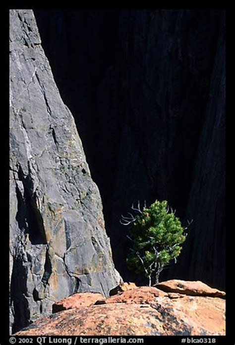 picture/photo: tree on rim near exclamation point. black