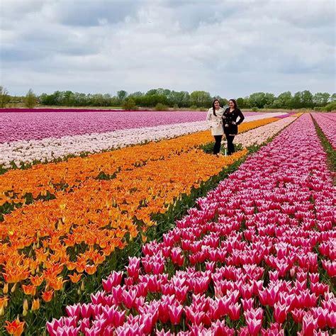 Bibit Bunga Tulip Di Bandung traveling ke 5 negara ini kamu bisa menikmati indahnya