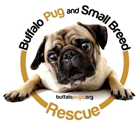 buffalo adoption buffalo pug small breed rescue inc front page
