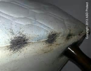 eviter une infestation de punaise de lit punaises